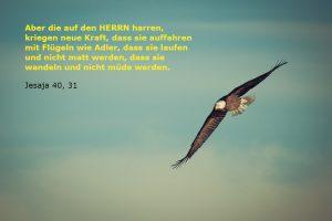 Jesaja 40,31